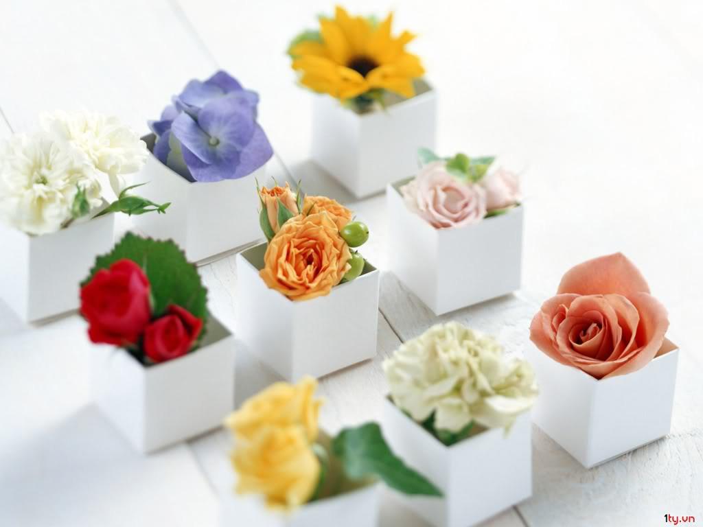 tro-choi-cho-tiec-cuoi-lavender-wedding-planner (4)